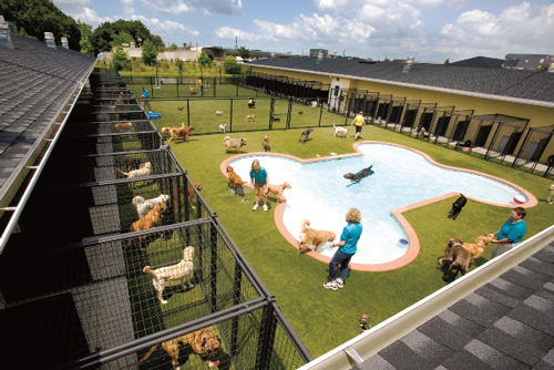 Best Dog Boarding Dallas Area